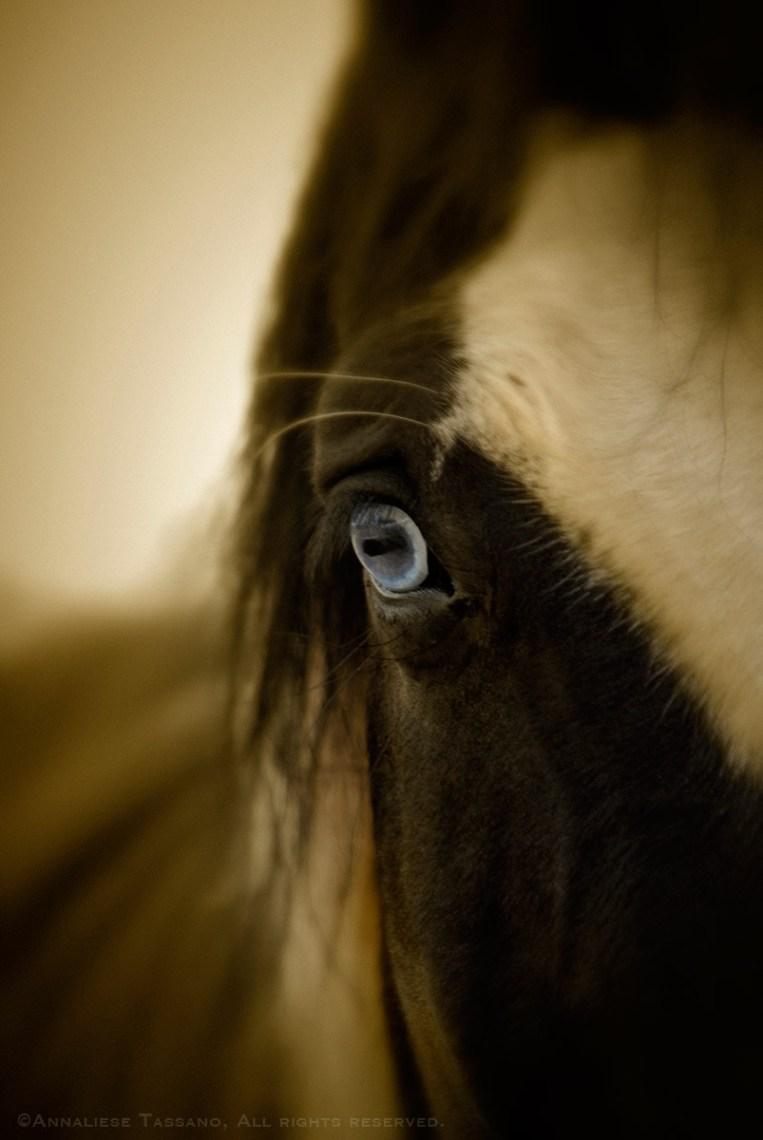 A paint warmblood darft cross horse with a blue eye.