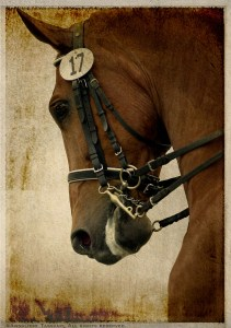 An antiqued color photograph of a chestnut, warmblood dressage horse wearing a full bridle and the show number 17.