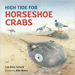 Illustration of horseshoe crabs coming onto a beach to spawn.