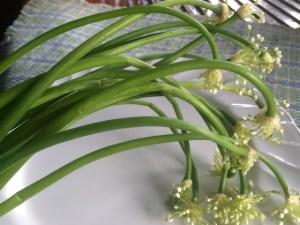ONION FLOWER 1