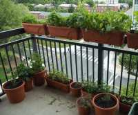 Best Fall Vegetables to Grow on Your Apartment Balcony ...