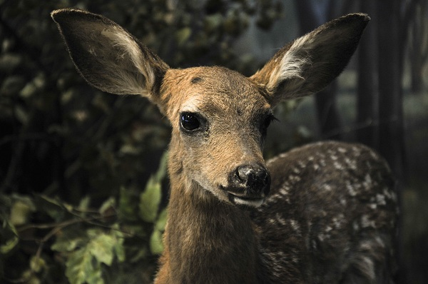 Hunters urged to get their deer checked out for Chronic Waste Disease