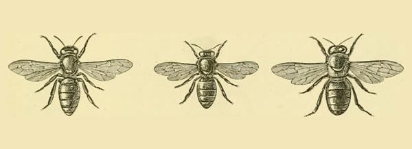abella-metamorfosi