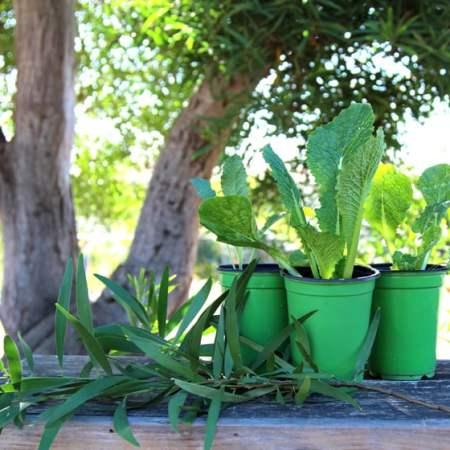 apieceofrainbow-garden-tips1 (2)