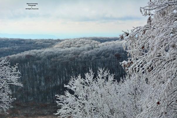 Late Autumn In High Knob Lake Basin - November 2, 2014