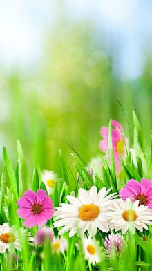 Green Spring Live Wallpaper APK | Download Android Apps APK