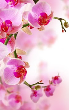 Best 3d Wallpaper Download App Orchid Live Wallpaper Apk Download For Android