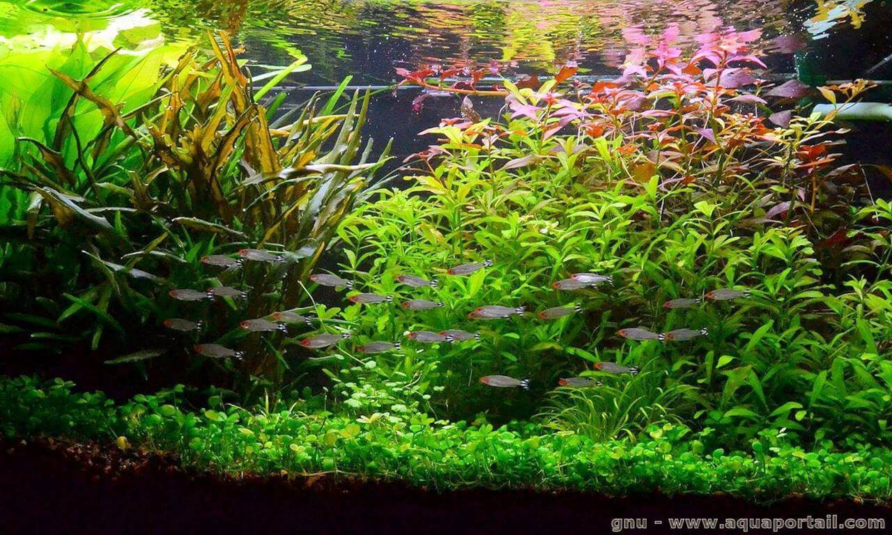Fish Tank Wallpaper Hd Aquascaping Aquarium Techniques D 233 Butant