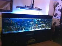 AMAZING 8FT FISH TANK WITH CABINET FOR SALE at Aquarist Classifieds