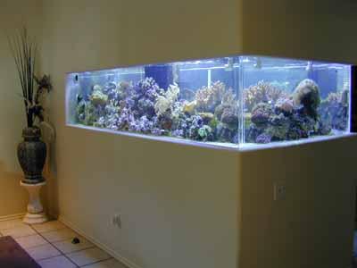 500 Gallon Coral Reef Tank, Aquarium Design, Marine Aquariums and