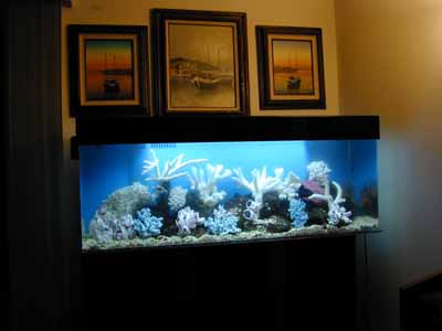 Reptile Tank 100 Gallon   Reptile Tanks For Sale