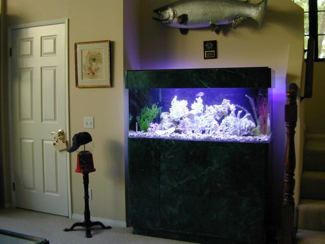 Fish Aquarium 60 Gallon Marine Fish Tank Aquarium Design Aquariums And