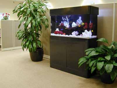 Aquarium Designs Related Keywords & Suggestions   Aquarium Designs