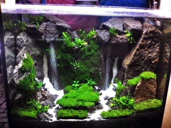 Wallpaper Batu Alam 3d De Ultieme Aquascape Gids Voor Prachtige Aquascaping