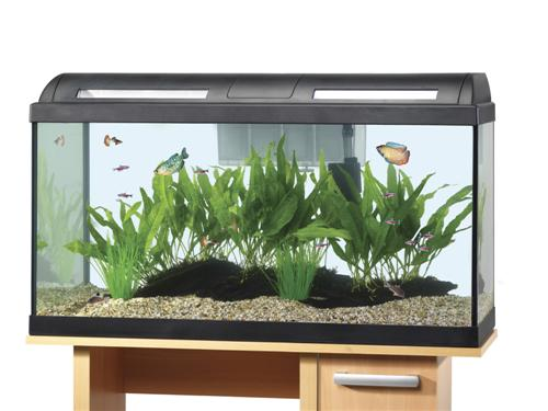 Starter Kits/Kids Sets / Hagen Marina Style 60 Tropical Aquarium Set