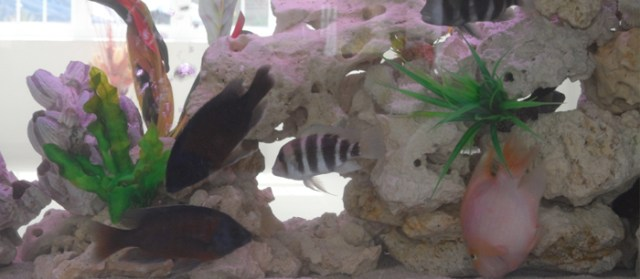 Tropical tank maintenance in Herfordshire | Aquatic Care in