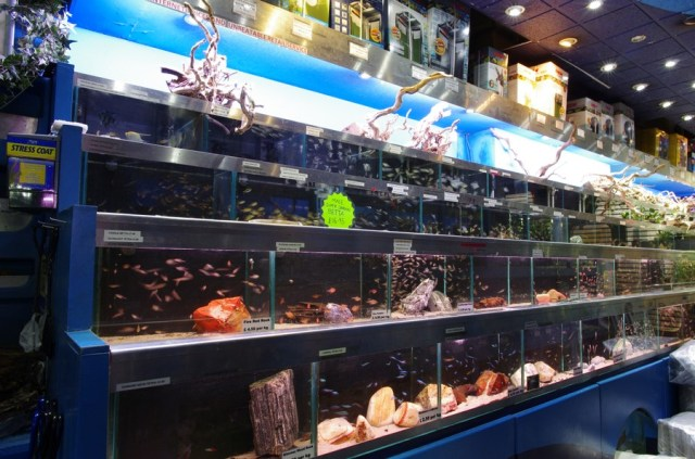 Freshwater fish store aquarium fish store freshwater for Exotic fish store