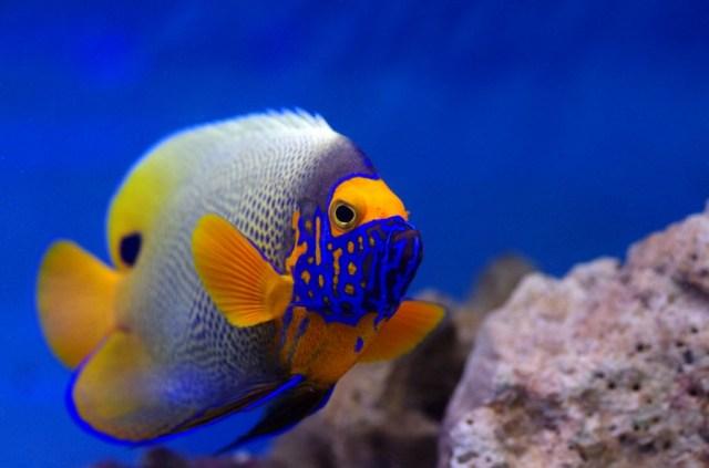 Marine Fish | The Aquatic Design Centre   ADC