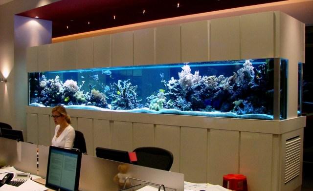 Aquariums, Manufacture, Installation, and Maintenance. London Aquarium