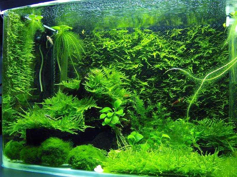 3d Wallpaper Avatar Moss Tank Aquaticquotient Com Photo Gallery