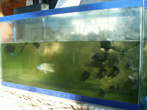 Aquarium   Article   Aquarium Hobbyist Tour of the Philippines