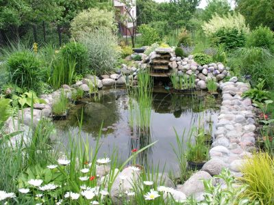 Garden Pond (Click to Enlarge)
