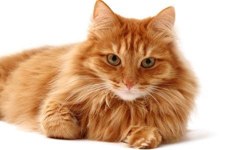 Cute Baby Blue Eyes Wallpaper Cat Health Problems Is My Cat Healthy Argos Pet Insurance