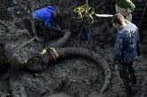 Farmer u Mičiganu pronašao kosti dlakavog mamuta (FOTO i VIDEO)
