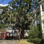 ... but even more, with how the community valued it's lovely Spanish moss laden trees (doing their best icicle impersonation)...