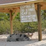 "At Staniel Cay, or more precisely, Big Major, we met ""the"" pigs."