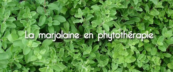 marjolaine en phyto 600 x 250