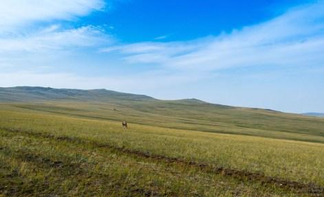 karge Landschaft in Sibirien