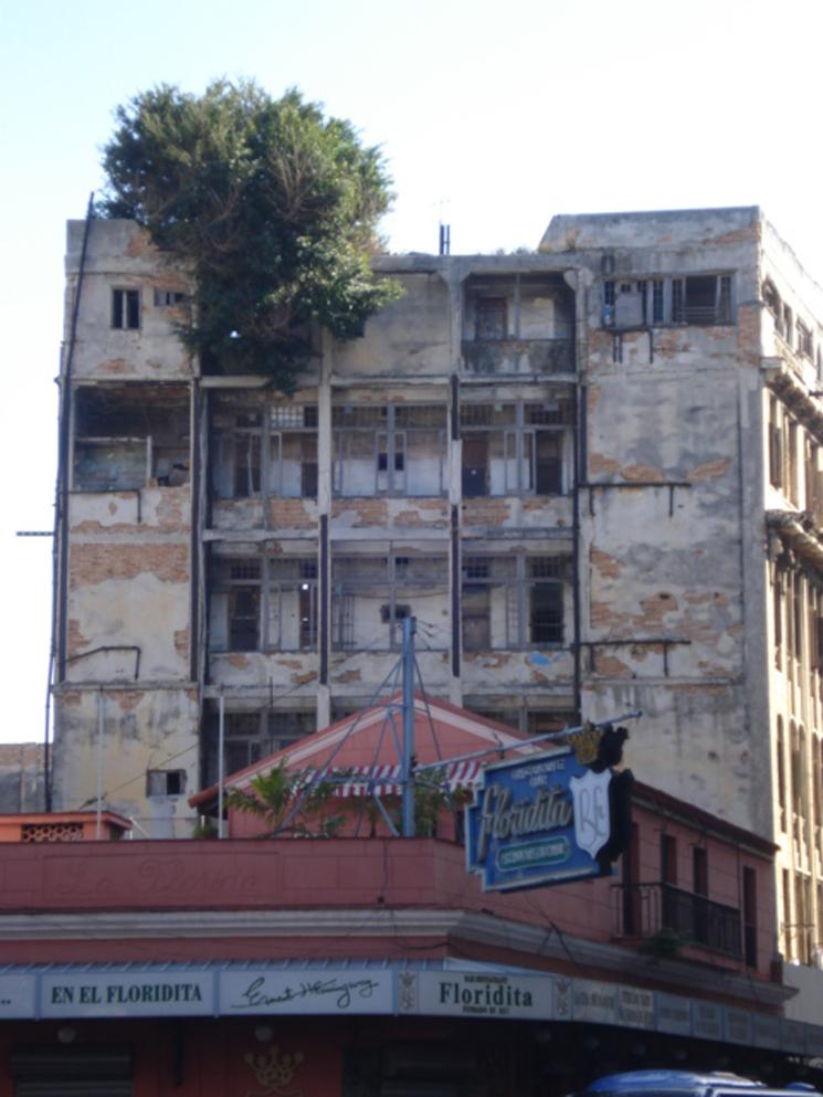 130 Habana Arbol