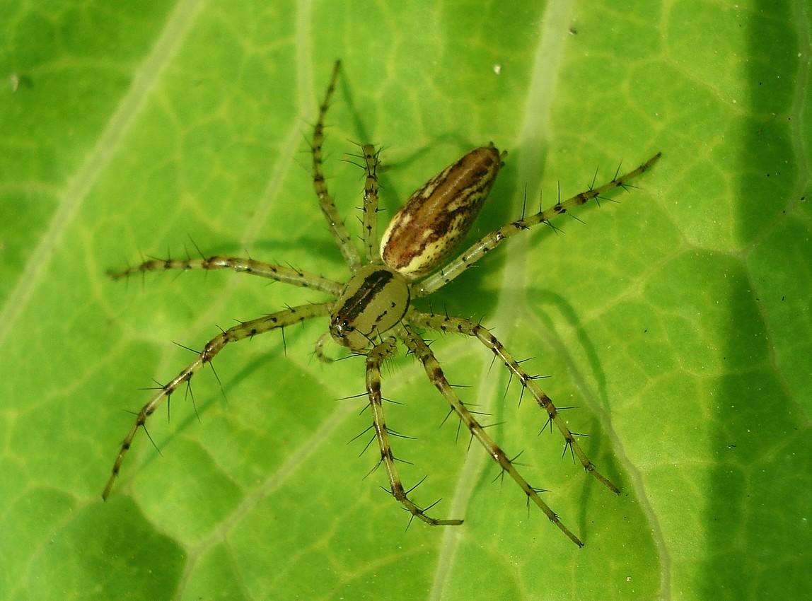 Aranhas e a Conquista Pelo Estômago