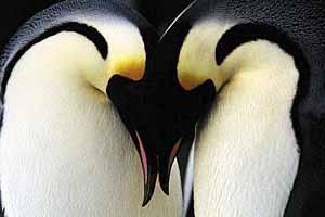 10 Animais Que São Monogâmicos Que Talvez Você Não Sabia