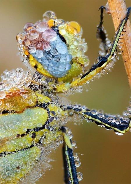Fotos macro de insetos 14