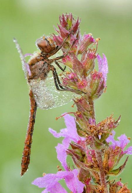 Fotos macro de insetos 03