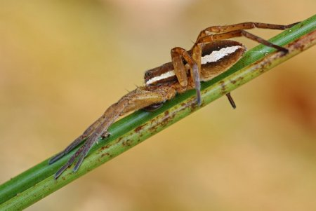 Fotos macro de insetos 06