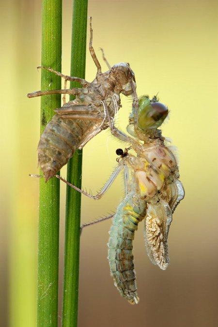 Fotos macro de insetos 07