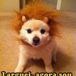 Dorgas?? Larguei, agora sou um Leão!