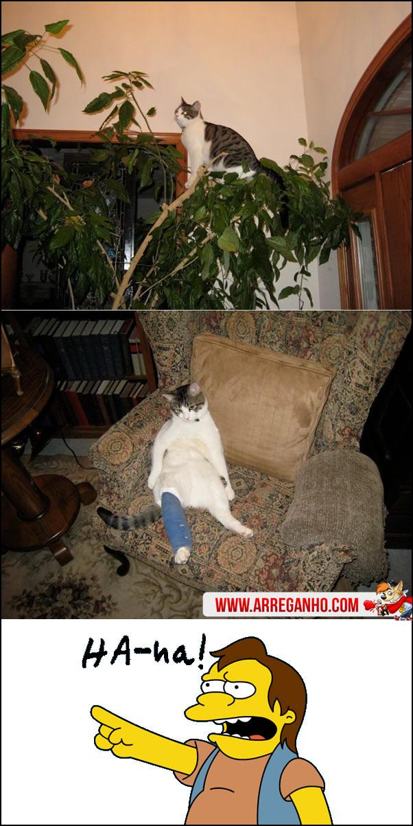 Gato perdendo a vida