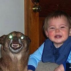 Fotos bizarras com animais