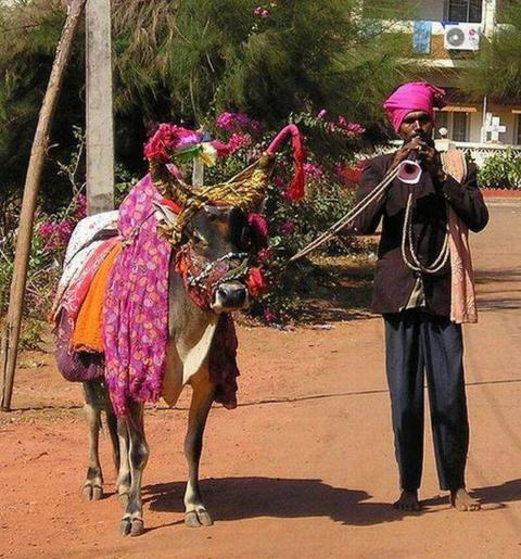 Curiosidades e Bizarrices Que Você Só Vê Na Índia!