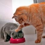 Gatos não são meros animais!