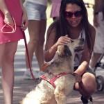 Campanha faz com que cadelinha abandonada passe o dia todo recebendo carinhos