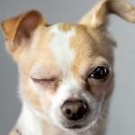 Gifs de cachorros com sérios problemas