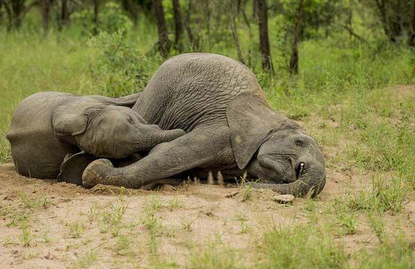 elefante01