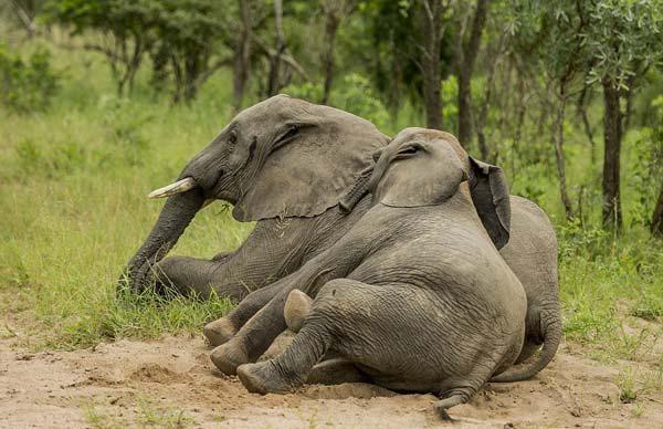 elefante04