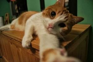 selfie02