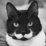 10 gatos que vão chamar sua atenção